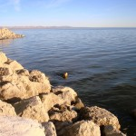 Salt crust on rocks at Salton Sea