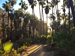 The walk through the palm oasis.