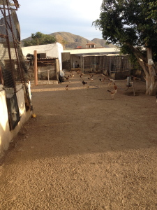 The spacious chicken growing complex.