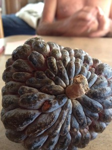 Or maybe a pine cone.