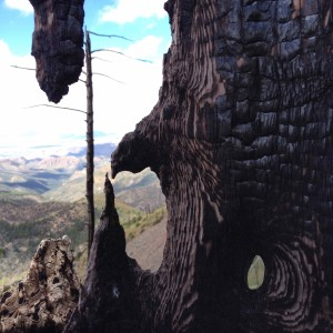 Burnt trunk in the Chiricahua wilderness.