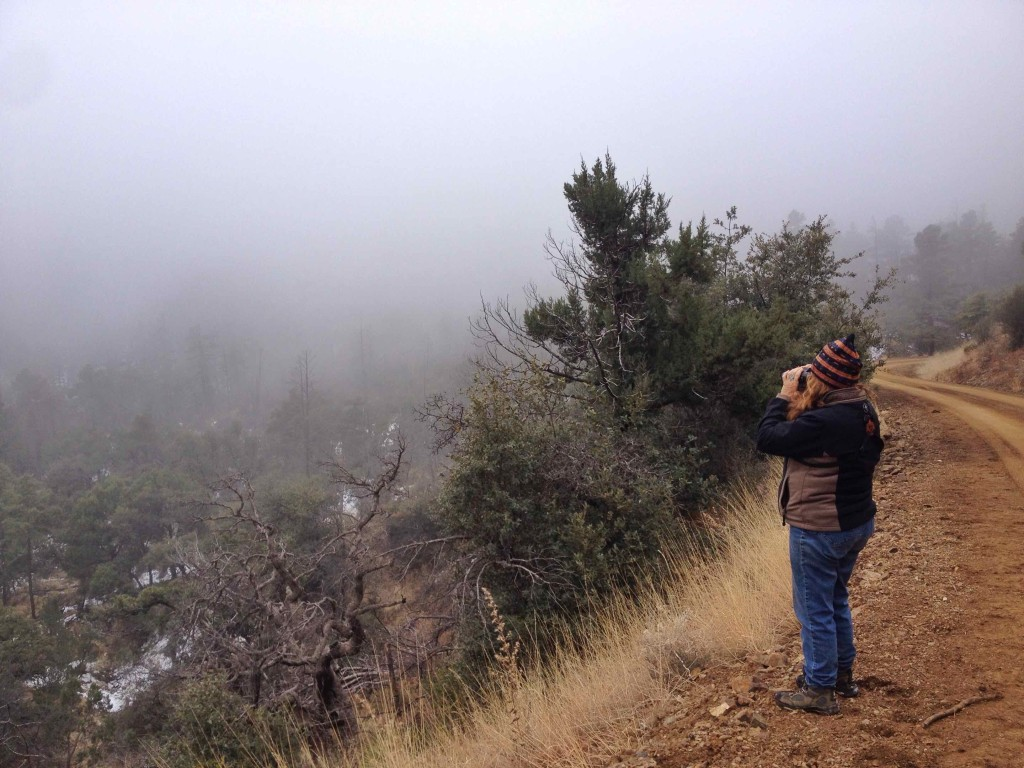 Peg Abbot looking for birds. She can find them despite the conditions.