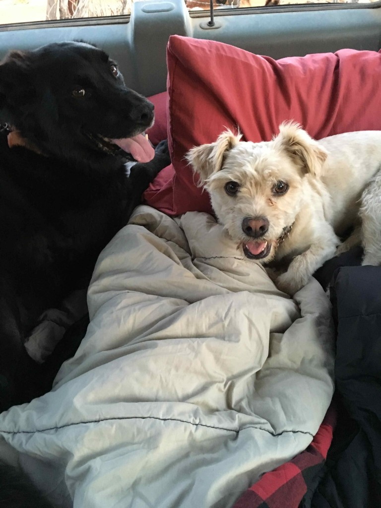 Olvis loves camping. Snuggles for everyone.