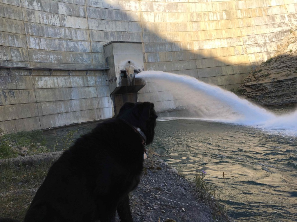 Elvis contemplates the meaning of it all at the Swift Dam outfall.