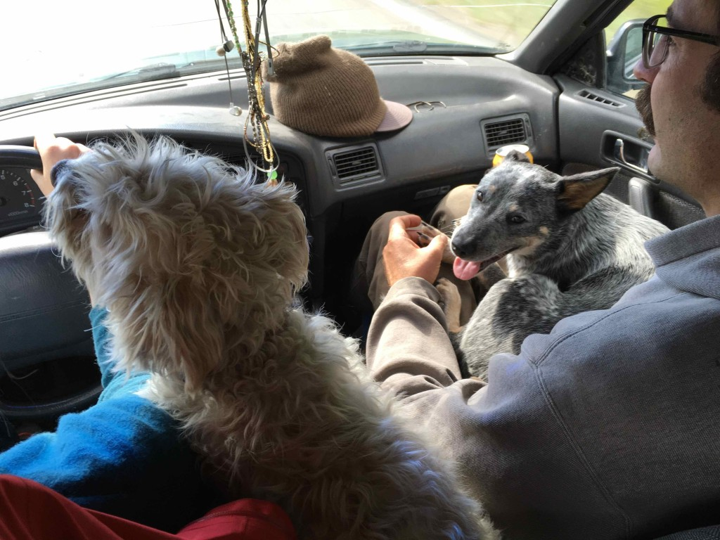A car ride with the pooches.