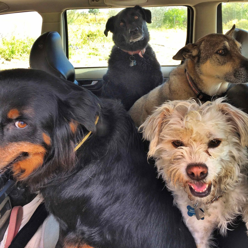 Dogs in car. Going nowhere.