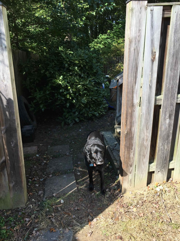Elvis is mad Burt fixed teh gate.
