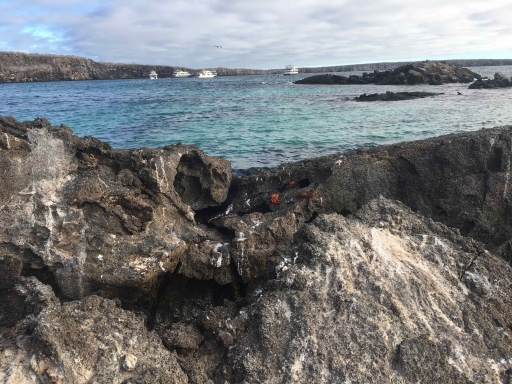 Marine Iguana country. Our ship in the background.