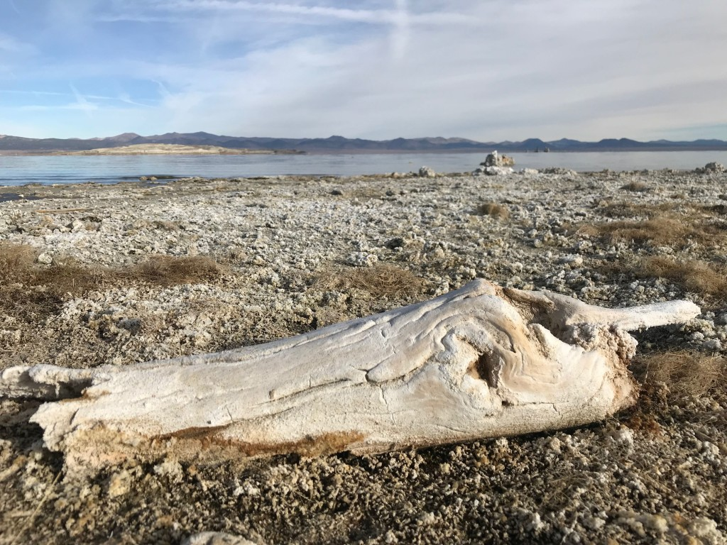 Salty log, Mono Lake