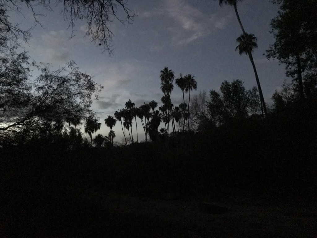 Sunset. Oak trees and palms.