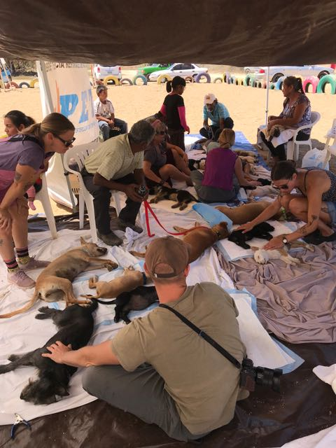 This is the recovery area. The owners and volunteers kept a close watch on the animals. Small dogs and cats are tricky.